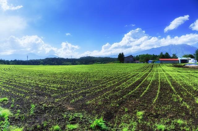 高原の苗畑の写真