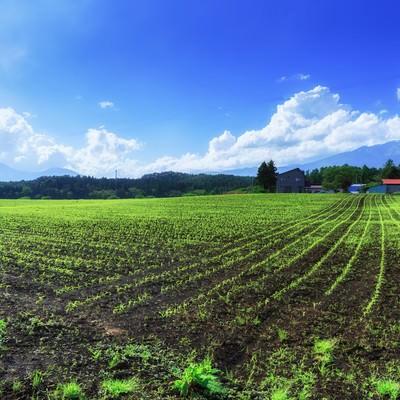 「高原の苗畑」の写真素材