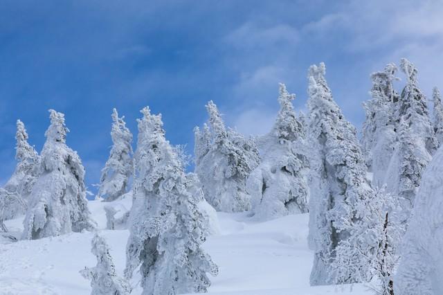 森吉山の樹氷の写真