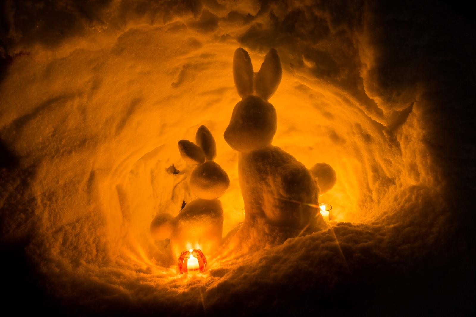 「雪洞のうさぎ(西和賀)」の写真