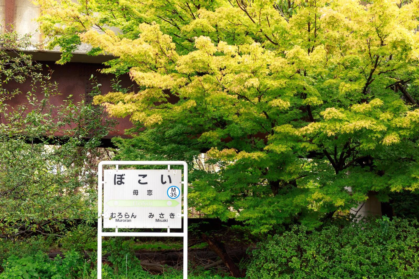 「母恋(ぼこい)駅のホーム」の写真