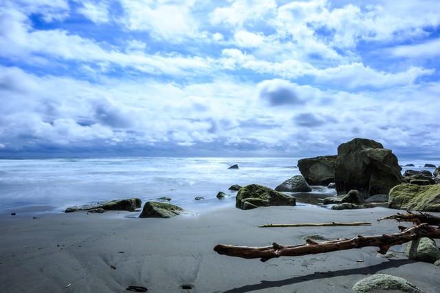 流木と砂浜の写真