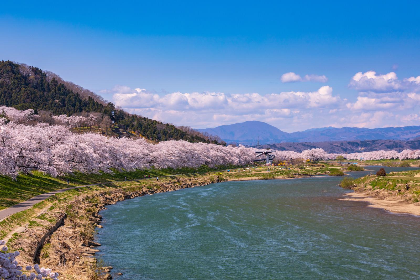 「一目千本桜(ひとめせんぼんざくら)」の写真