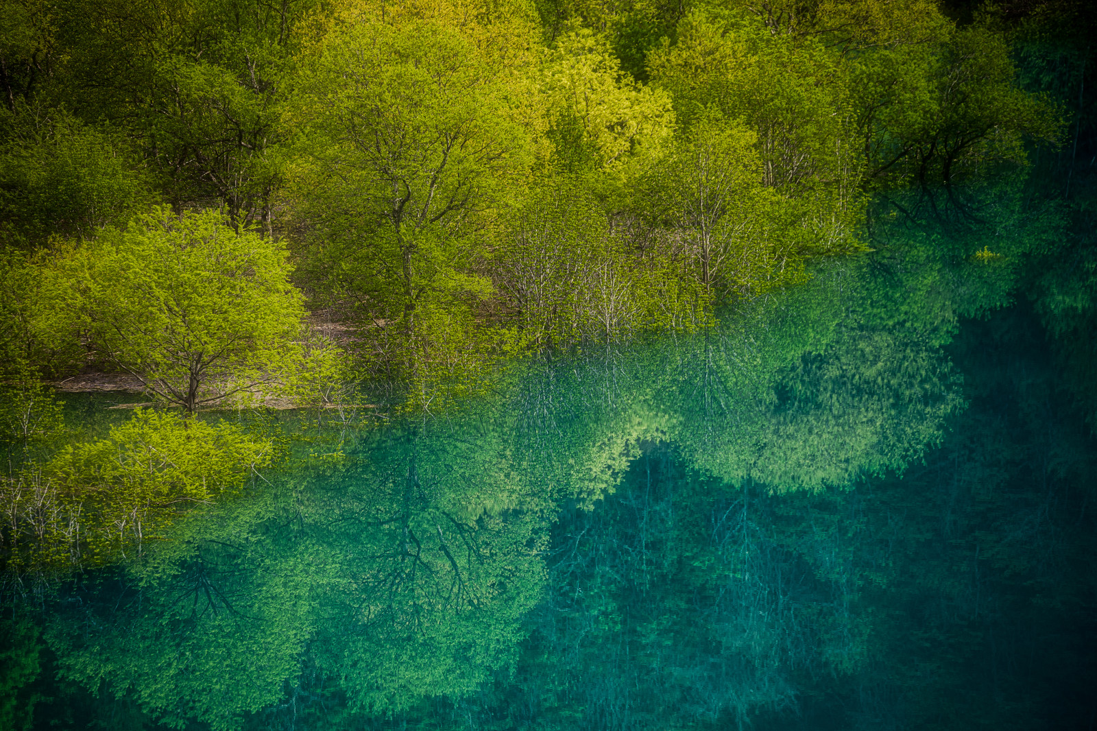 「東山魁夷の絵のような玉川ダムの水没林」の写真