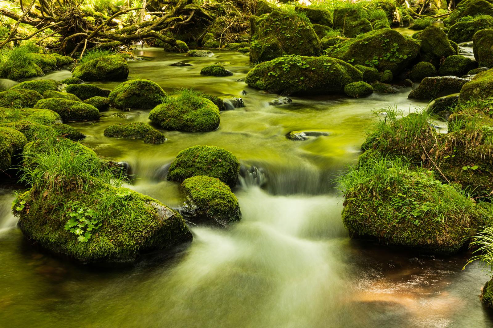 「苔石と水の流れ」の写真