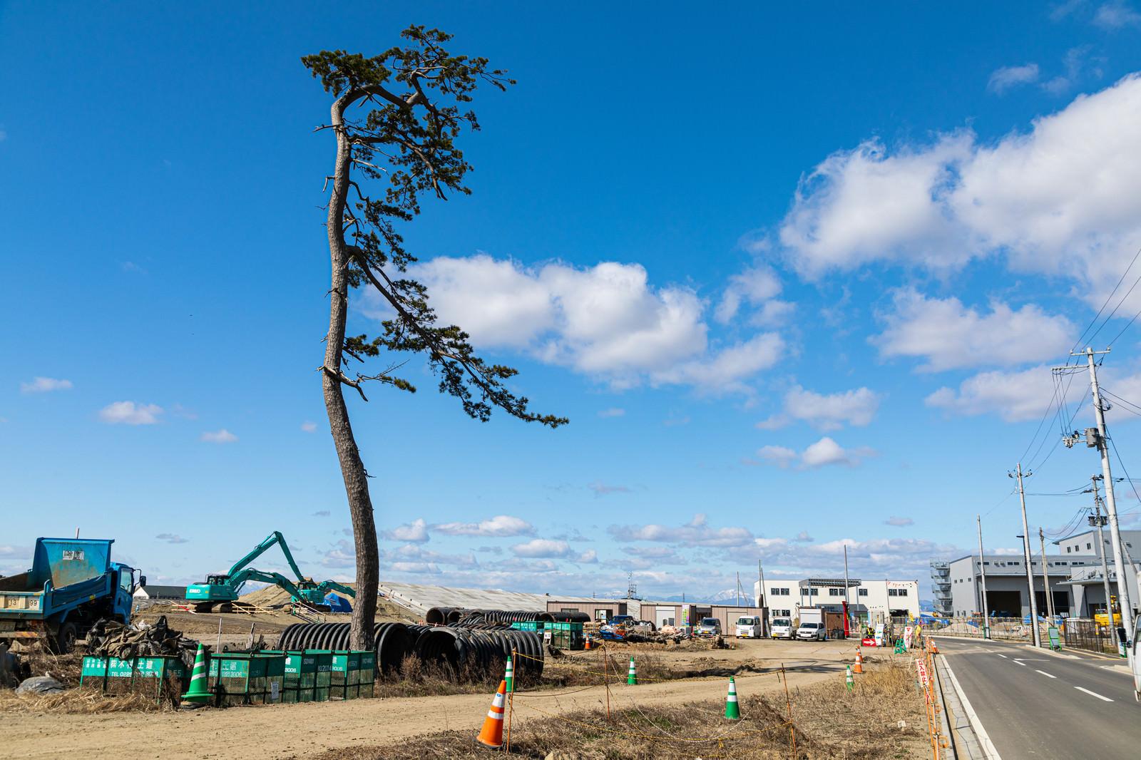 「震災復興工事と一本松」の写真