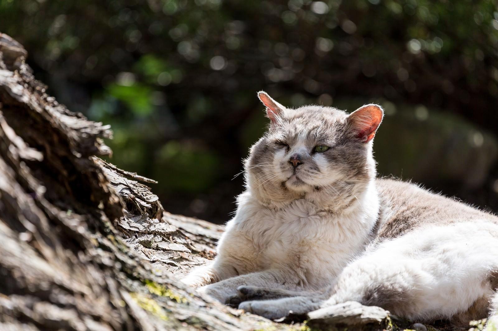 「ふてぶてしい侵入者(野良猫)」の写真