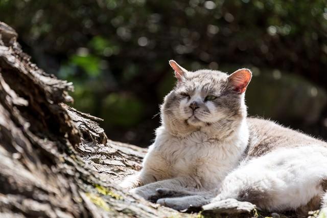ふてぶてしい侵入者(野良猫)の写真