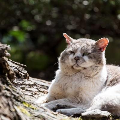 「ふてぶてしい侵入者(野良猫)」の写真素材