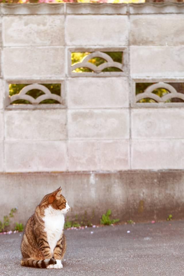 昼下がりの猫の写真