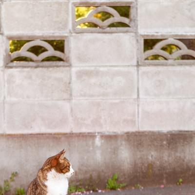 「昼下がりの猫」の写真素材