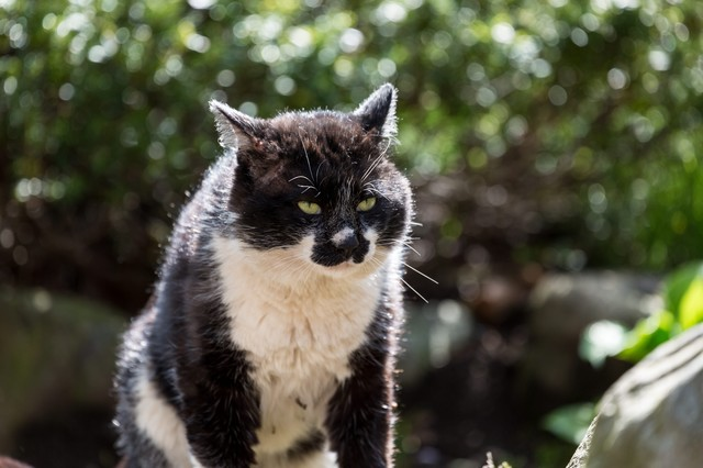 腹を空かしてぶっ倒れそうな猫の写真