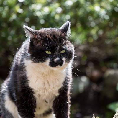 「腹を空かしてぶっ倒れそうな猫」の写真素材