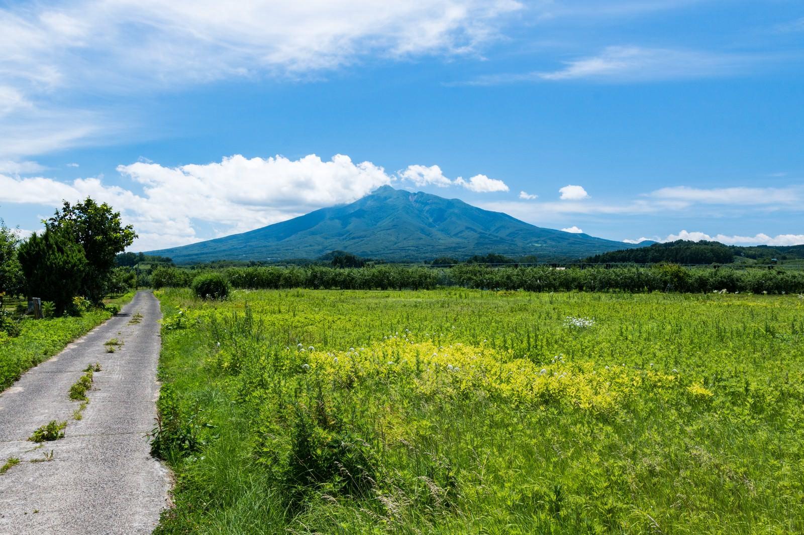 「野原の先に岩木山(いわきさん)」の写真