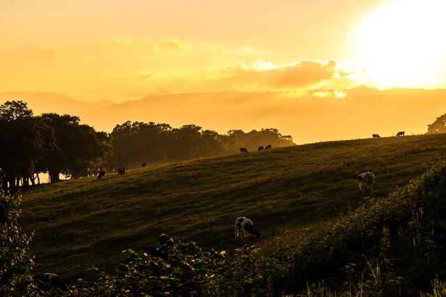 夕焼けと牧場の写真