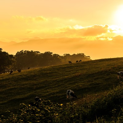 「夕焼けと牧場」の写真素材