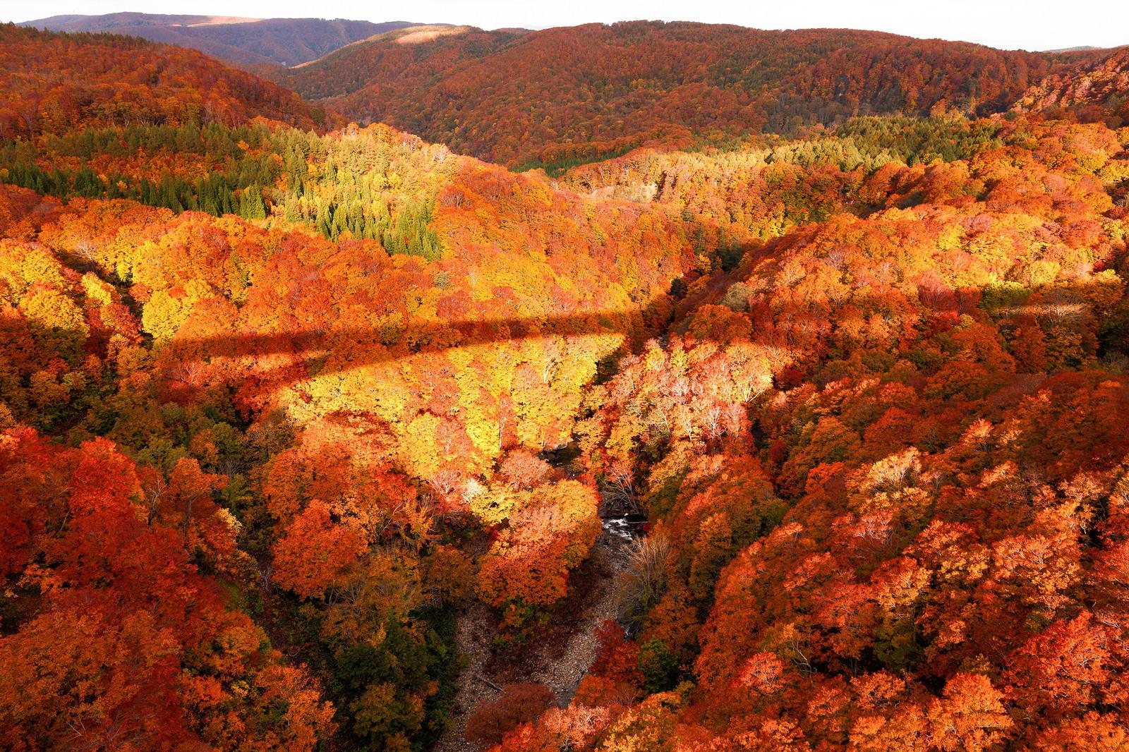 「紅葉にかかる橋の影」の写真