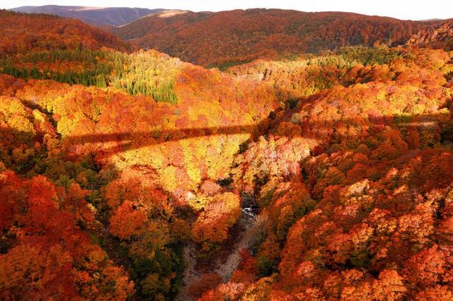 紅葉にかかる橋の影の写真