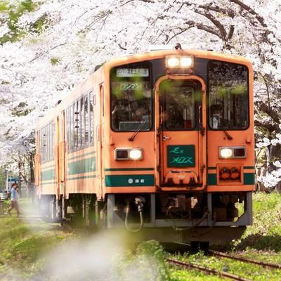 「桜トンネルとローカル線」の写真素材