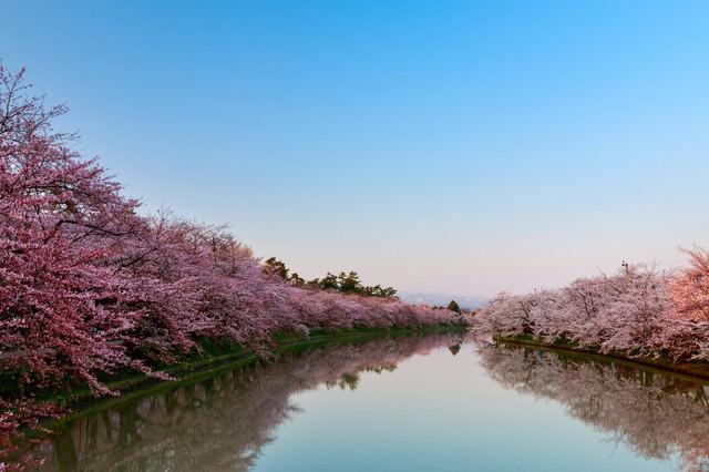 満開の桜と澄んだ青空の写真