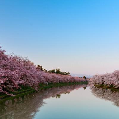 「満開の桜と澄んだ青空」の写真素材