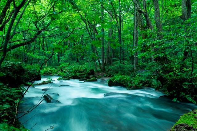 奥入瀬渓流の写真