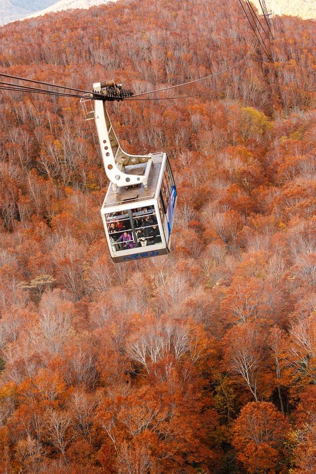 八甲田山のロープウェイと紅葉の写真