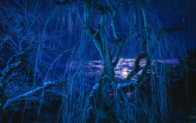 冬の枝垂れ桜と満月の夜の写真
