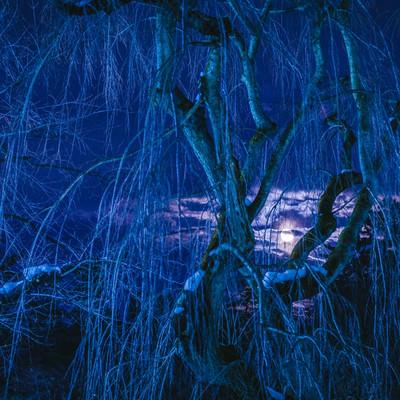 「冬の枝垂れ桜と満月の夜」の写真素材