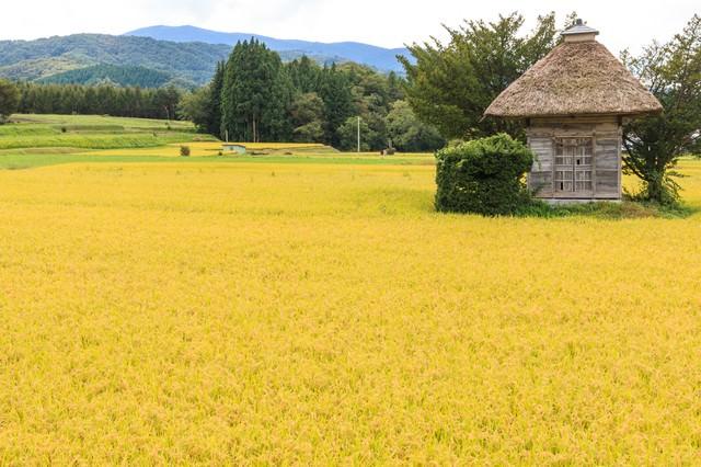 遠野の荒神神社と黄色の稲穂の写真
