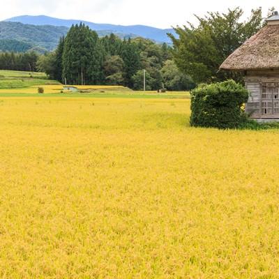 「遠野の荒神神社と黄色の稲穂」の写真素材