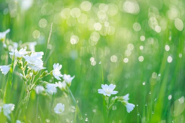 朝の雑草の写真