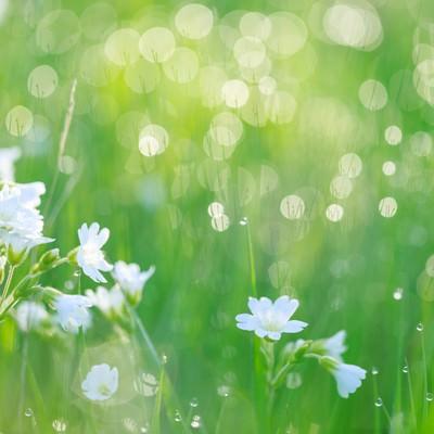 「朝の雑草」の写真素材