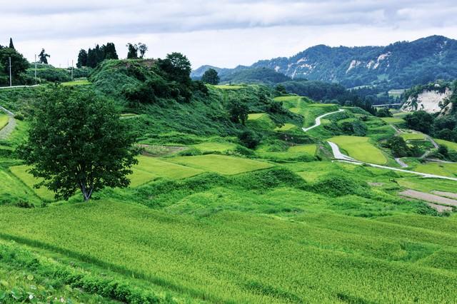 大蔵村の棚田の写真