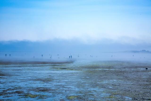 靄の中の人影(潮干狩り)の写真