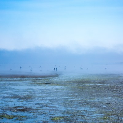「靄の中の人影(潮干狩り)」の写真素材