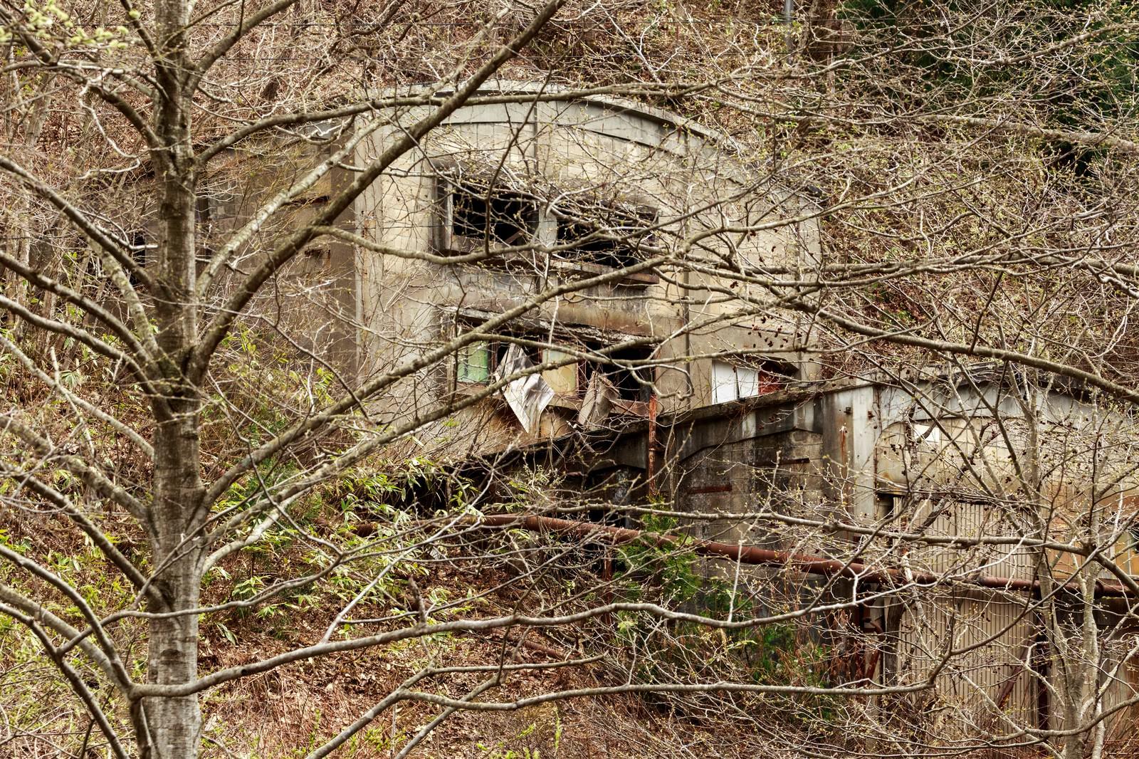 「森の中の廃墟(古遠部鉱山)」の写真