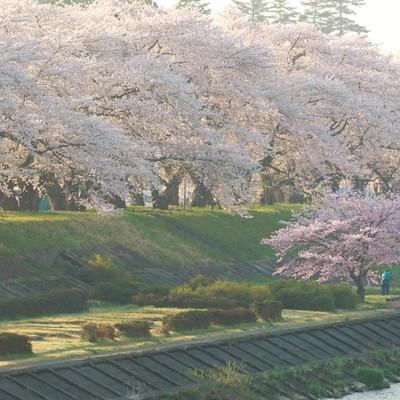 「角館の朝と満開の桜並木」の写真素材
