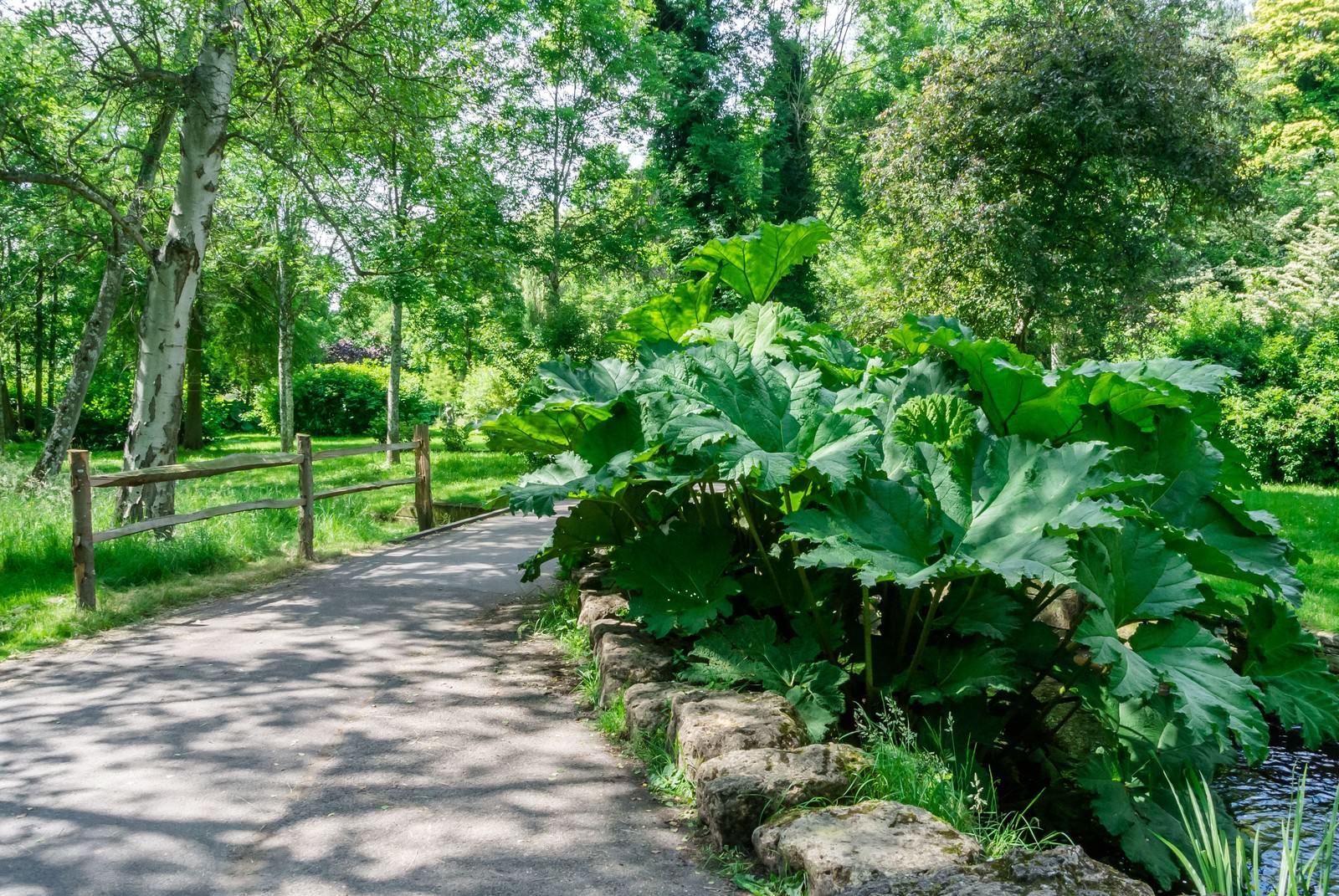「遊歩道と植物」の写真