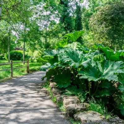 「遊歩道と植物」の写真素材