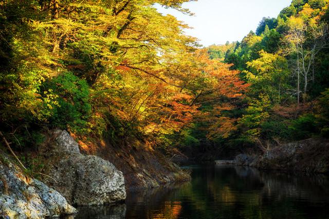 紅葉の渓谷の写真