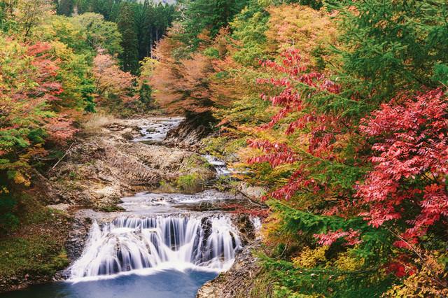 下北の川内川の紅葉の写真