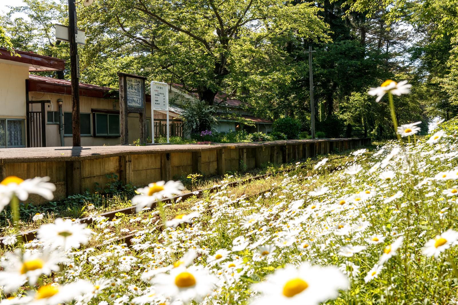 「津軽鉄道芦野公園駅」の写真