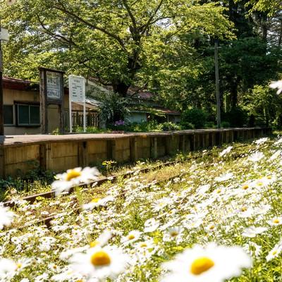 「津軽鉄道芦野公園駅」の写真素材