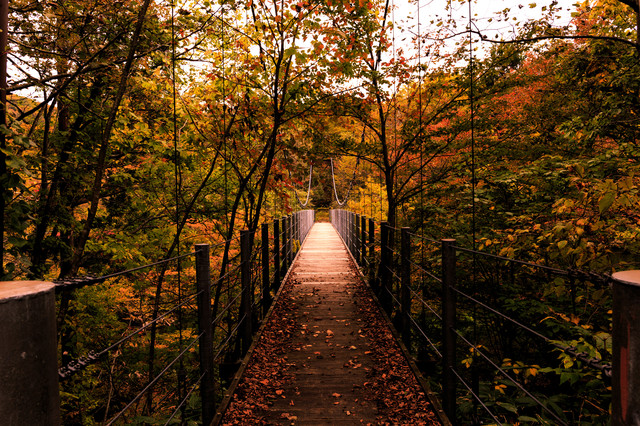 吊橋と紅葉の写真