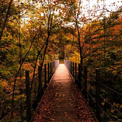 「吊橋と紅葉」の写真素材