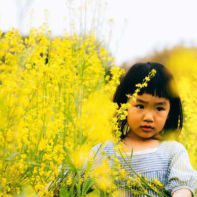 「菜の花畑と女の子」の写真素材