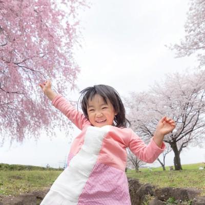 「桜満開大興奮」の写真素材