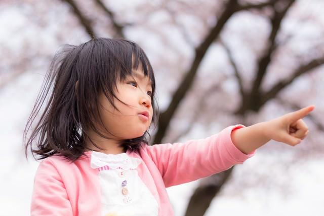 桜の季節、小さい女の子の写真