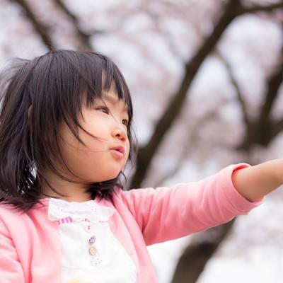 「桜の季節、小さい女の子」の写真素材